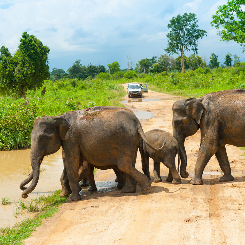 Sri Lanka Culture, Nature and Wildlife Round Island Discover ... Image 12