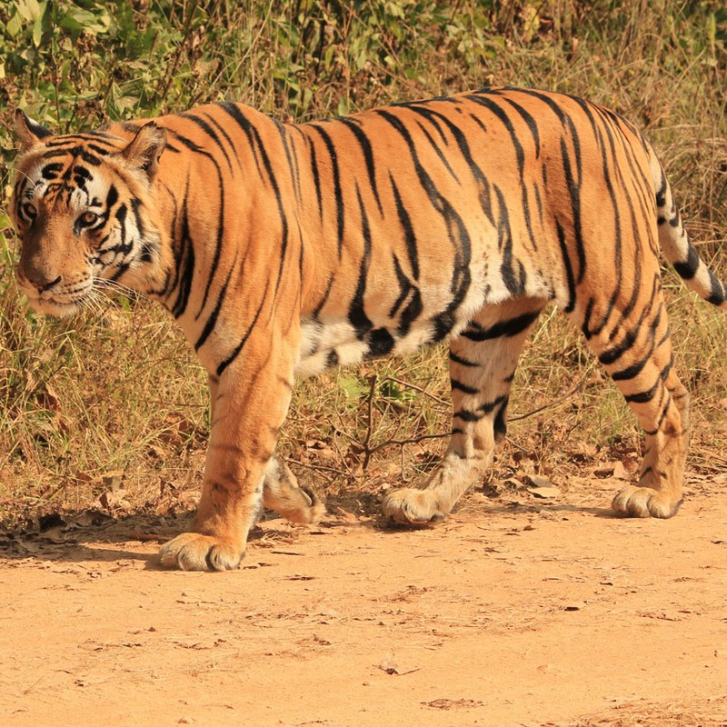 India Wildlife Tour Image 6