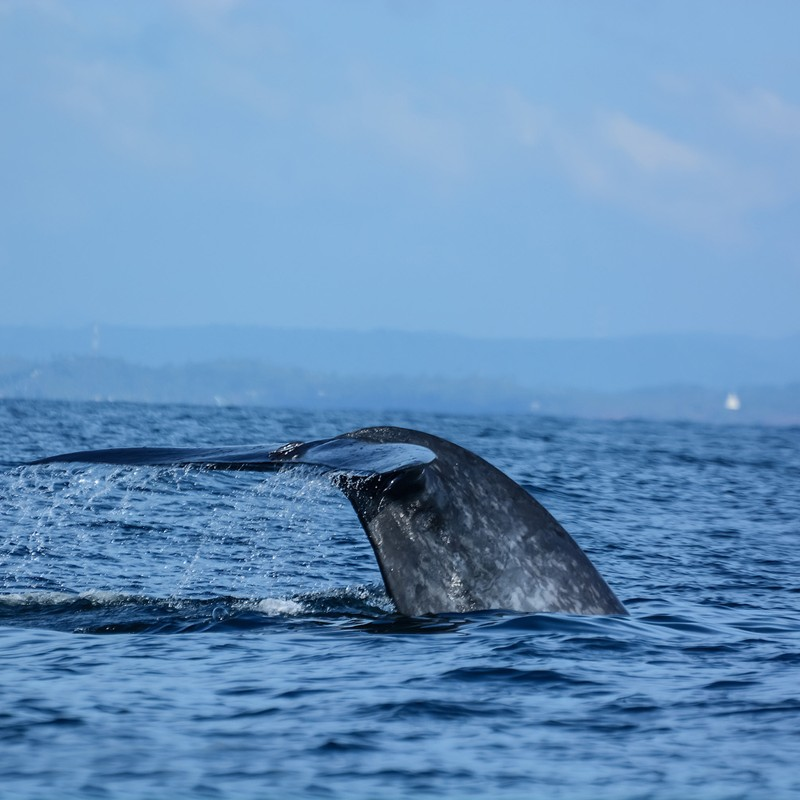 Whale watching tours in Sri Lanka at a glance
