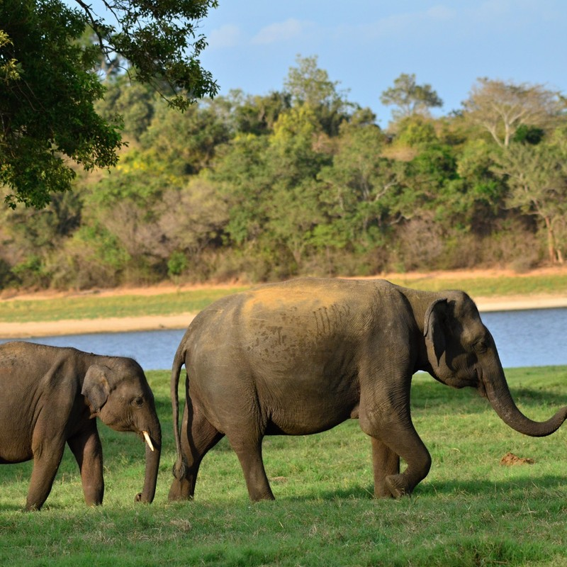 Northern Sri Lanka, Wildlife and beach tour at a glance