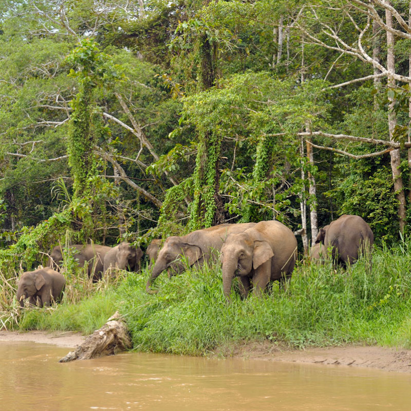 Borneo culture and wildlife tour at a glance